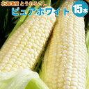 とうもろこし北海道産/メロンより甘〜くみずみずしい♪白いとうもろこしピュアホワイト