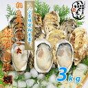 殻付き 牡蠣 3kg 【冷蔵便】10800円以上は送料無料 漁師が販売、とれたて新鮮な 殻付き カキ です。 生食用 兵庫県 相生