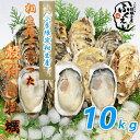 殻付き 牡蠣 10kg 【冷蔵便】送料無料 漁師が販売、とれたて新鮮な 殻付き カキ です。 生食用 兵庫県 相生