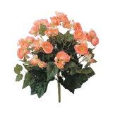 タカショー 和風下草「ベゴニア オレンジ」W25cm