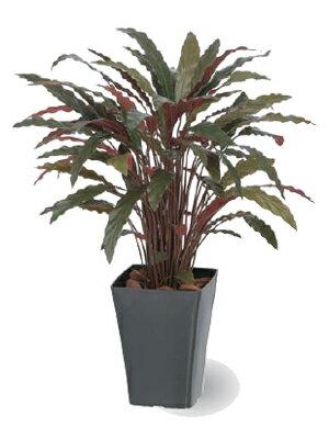 タカショー グリーンデコ鉢付 観葉植物「カラテアRレッド」0.9m 【送料無料!】
