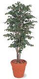 【!】タカショー グリーンデコ鉢付 観葉植物「ベンジャミンナチュラル」1.8m