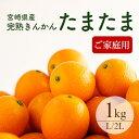 【送料無料】完熟きんかん「たまたま」L〜2Lサイズ 約1kg...