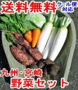 【収穫の秋到来】ヤマトの野菜セット たっぷり根菜+選べる葉物2種さらに、レビュー記載で赤卵6コ【安納芋も入ります】送料無料!九州・宮崎よりお届け