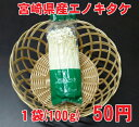 【宮崎産】エノキタケ えのき茸 1袋 50円 【税別】 【同梱商品】
