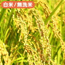 【10kg×6回継続注文】<令和元年産>田辺さん家の新潟県産コシヒカリ100%10kg×6ヶ月(rice19-10kg-6m)※白米・無洗米選べます。※有機..