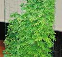 サイドロープ付 緑のカーテンネット(園芸ネット) 3.6×5m 10cm角目 5P_0118