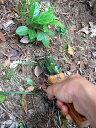 【NO.640】仁作 レジャーナイフ両刃型 山遊び・園芸作業に特化した掘る機能を持つナイフ【頑張って送料無料!】