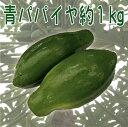 三大栄養素を分解する食物酵素が豊富! 美容と健康を促す南国野菜! 沖縄産青パパイヤ約1kg(1〜2個)