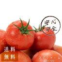 送料無料 トマト 約2kg 安心安全 農家直販 ハウス桃太郎トマト ヨダファーム 樹上完熟 採れたて