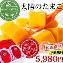 宮崎マンゴー 太陽のたまご 青秀 2Lサイズ (350g以上...