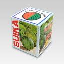 Suika-l-1