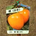 【果樹苗】蜂屋柿(渋柿)【苗木】【落葉】(地掘り根巻き苗)(はちやがき)【RCP】