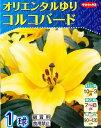 【秋植え球根】〜オリエンタルゆり〜コルコバード(1球詰)【サカタのタネ】【RCP】