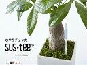 水分計サスティー(Sサイズ用リフィル)水やり,観葉植物,洋蘭,多肉植物