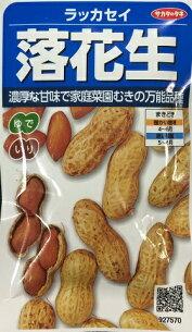 ピーナッツ ラッカセイ サカタのタネ