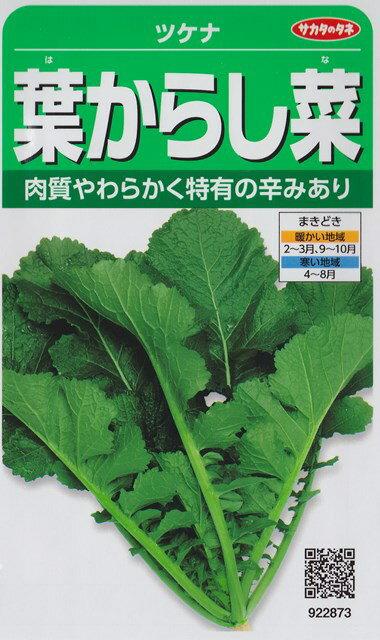葉からし菜