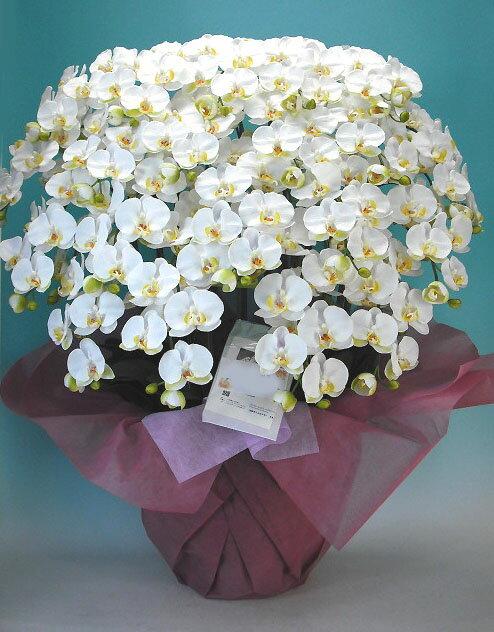【光触媒】【造花】胡蝶蘭 大輪 白 20本立ち【送料無料】