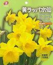 お徳用水仙「黄ラッパ水仙」10球入 球根【RCP】 05P01Oct16