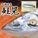 【送料無料】鮭児 幻の鮭児 北海道 羅臼産(約2.3kg)【楽ギフ_包装選択】【楽ギフ_のし】