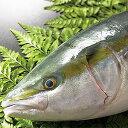 魚屋の目利きが厳選!吉川水産こだわりのブリ(約5kg)