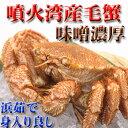 北海道噴火湾産毛ガニ 味噌がとても濃いです!【あす楽_土曜営業】【あす楽_日曜営業】02P03Dec16