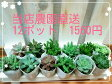 <当店農園直送> 多肉植物 12ポット  1560円
