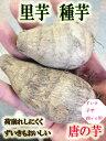 新種入荷!! 里芋種子 唐の芋 1kg【里芋】【唐の芋】【サトイモ種芋】