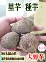 新種入荷!! 里芋種子 大野芋 1kg【里芋】【種芋】