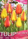 花, 園藝, DIY - まじかるチューリップ エルニーニョ 5球入り