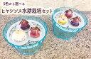 5色から選べる ヒヤシンス水耕栽培容器セット 水耕用特大球根3球【ヒヤシンス水耕栽培】