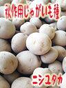長崎県産 秋じゃがいも種子 西豊 ニシユタカ 1kg 混合サイズ【種芋】【検品合格済】【秋馬鈴薯種子