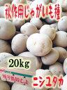 送料無料 秋じゃがいも種子 西豊 ニシユタカ 20kg袋 混合サイズ【種芋】【検品合格済】【秋馬鈴薯種子】