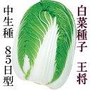 白菜種子 王将 4.5ml 小袋【郵便送料110円?】【タキイ種苗】【白菜の種】【野菜種子】