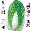 白菜種子 無双 2.5ml小袋【郵便送料110円?】【タキイ種苗】【白菜の種】【野菜種子】
