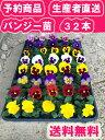 【本州送料無料 生産者直送】花つき大輪 パンジー苗 32本花色たくさん