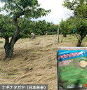 【送料無料】【草マルチ】ナギナタガヤ 10kg 種子