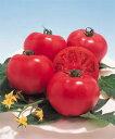 【郵便送料無料】ハウス桃太郎 大玉トマト種子 1000粒 【トマト種】【タキイのタネ】【野菜の種】