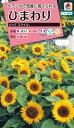 花種 NL300 ひまわり ビッグスマイル 小袋 FHM313 【花の種】【タキイのタネ】【送料110円〜】【ガーデニング】