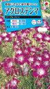 花種 NL150 アグロステンマ パープルクイン 小袋 [FZZ438]【花の種】【タキイのタネ】【郵便送料110円〜】【ガーデニング】