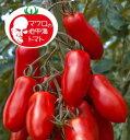 マロウの地中海トマト サンマルツァーノリゼルバ 中玉トマト種子 100粒【イタリアトマト】【野菜の種】【郵便利用で送料無料】