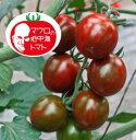 マロウの地中海トマト ブラッディタイガー ミニトマト種子 8粒【イタリアトマト】【野菜の種】