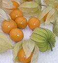 食用ほおずき種子 ストロベリートマト(食用トマトホウズキ) 30粒  【食用ほおずき種子】【野菜の種】