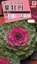 花タネ NL300 葉牡丹 F1 紅はと 小袋 [FHB511]【花の種】【タキイのタネ】【郵便送料110円〜】【ガーデニング】
