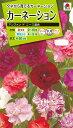 花種 NL200 カーネーション アンファン ド ニース混合 小袋 FCN149 【花の種】【タキイのタネ】【送料110円〜】【ガーデニング】