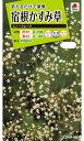 花種 NL200 宿根かすみ草 スノー フレーク 小袋 FKS211 【花の種】【タキイのタネ】【送料110円〜】【ガーデニング】