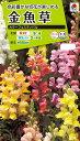 花種 NL200 金魚草 カラーフェスティバル 小袋 FKG110 【花の種】【タキイのタネ】【送料110円〜】【ガーデニング】
