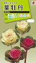 花種 NL200 葉牡丹 瀬戸混合 小袋 [FHB319]【花の種】【タキイのタネ】【送料110円?
