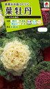 花種 NL200 葉牡丹 F1 かもめ混合 小袋 FHB579 【花の種】【タキイのタネ】【送料110円〜】【ガーデニング】