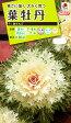 花種NL200 葉牡丹 F1 白さんご 小袋 [FHB612]【花の種】【タキイのタネ】【送料110円〜】【ガーデニング】